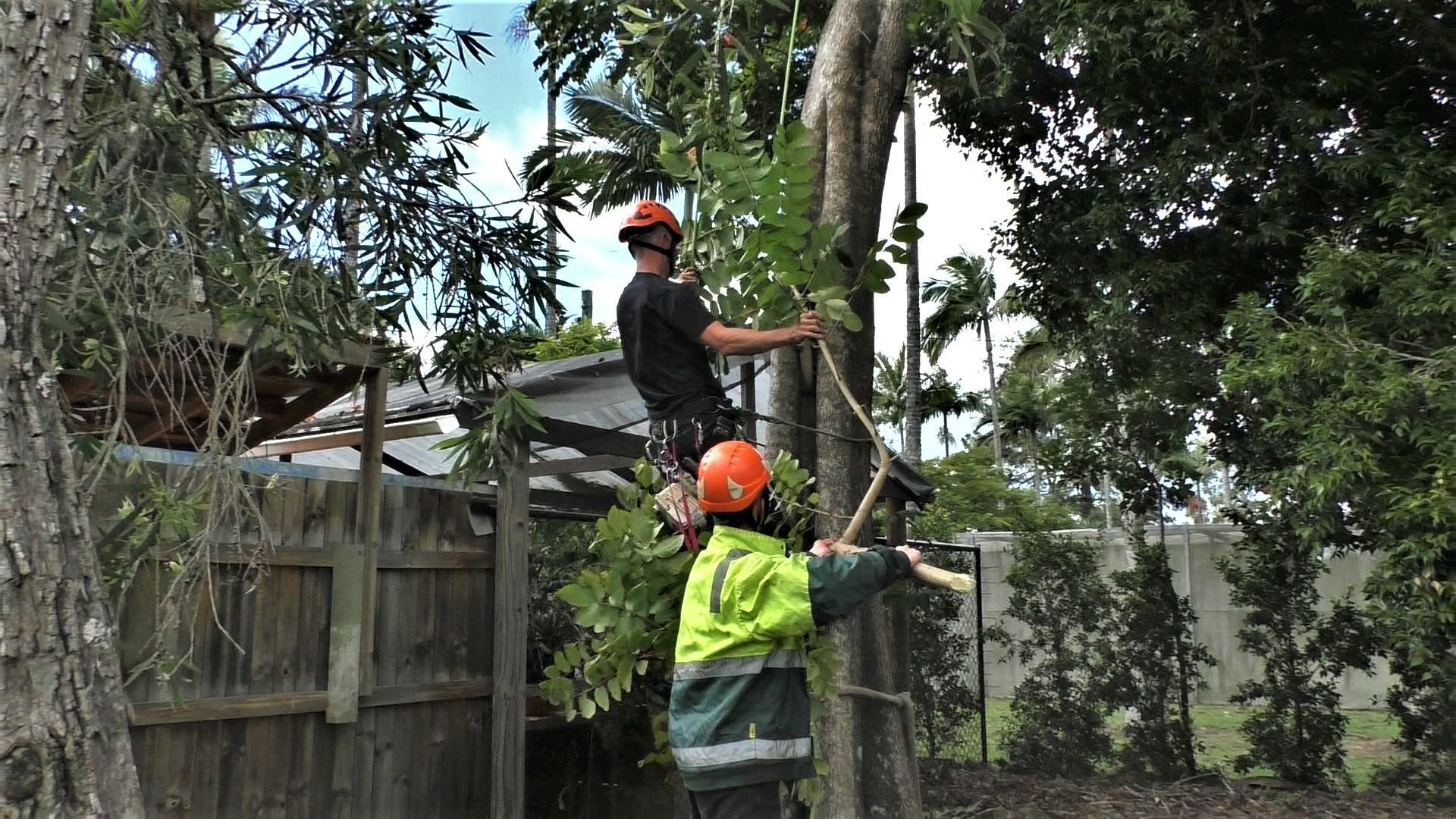 Arborcare SEQ Senior Arborist Paul Ash - Treelopper Brisbane North 02